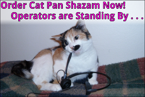 Cat Pan Shazam – Clean and Green Litter Box Solutions You and Your Cats Will Love!