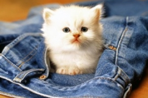 A child's guide to choosing and caring for a kitten in 9 easy steps